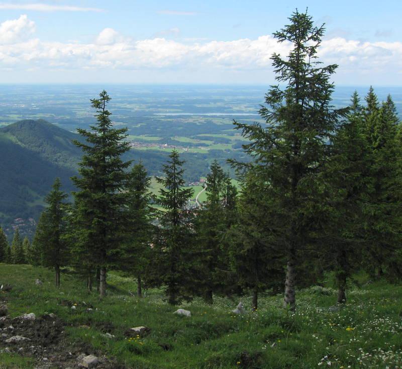 Breit ausladende Baumkronen sind für den Anbau im Gebirge ungeeignet. Auf ihnen sammelt sich viel Schnee, bis hin zum unausweichlichen Bruch des Baumes an. Bild © VLAB