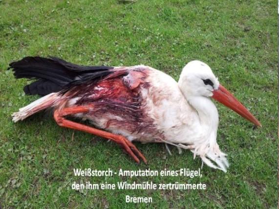 So sieht der Naturschutz des BUND-Vorsitzenden Hubert Weiger aus und so soll es nach seinem Willen noch jahrzehntelang weitergehen