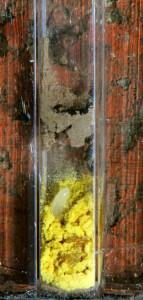 Wildbienen-Ei auf Löwenzahnpollen im Brutgang